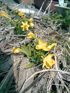 早春の花々