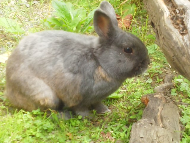 隣のウサギ